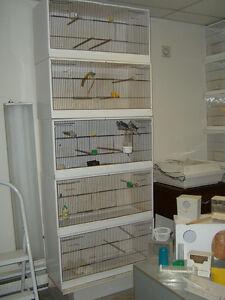 cage d'élevage pinsons Saint-Hyacinthe Québec image 2