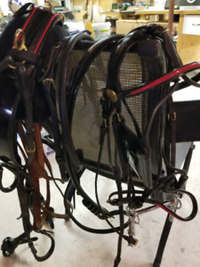 Horse Show Harness