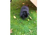 Lovely Rabbits looking for new home