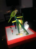 Conure with cage and accessories