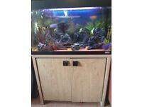 Fish plus tank