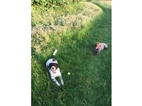 Dog walking and dog sitting/boarding services based in Highgate