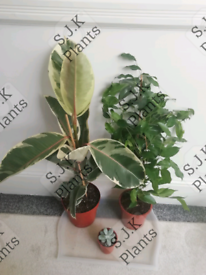 3 indoor house plant bundle