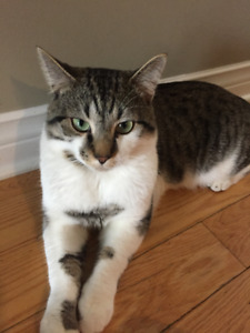 Lost cat in Bedford