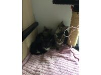 4 Adorable Kittens text after Thursday as may have been collected