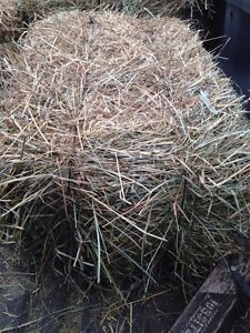 Quality hay bales for sale