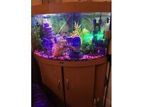 Jewel trident 190 ltr aquarium