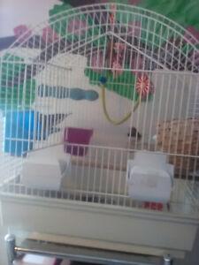 2 pinsons mâle avec la cage nourriture 50$