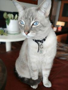 Lost Cat SilverSprings NW CALGARY