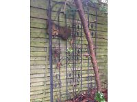 Iron trellis flower holders