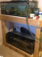Looking to trade full cichlid fish setup for Parrot