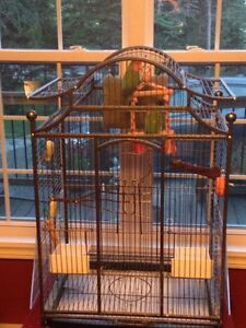 Two love birds, new cage and toys