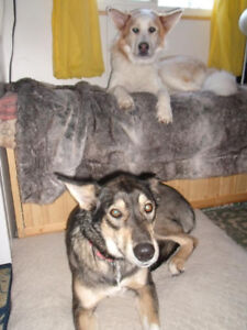 In search of long term, husky-dog friendly out of town rental
