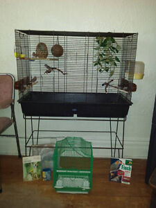 Finch Birds Family Of 3 For Sale