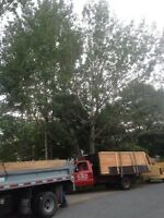 Tree & limb removal, stump grinding, chipping free quotes