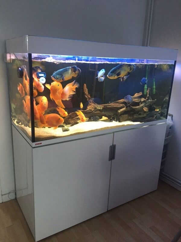 eheim incpiria 400 litre aquarium complete with fish in. Black Bedroom Furniture Sets. Home Design Ideas