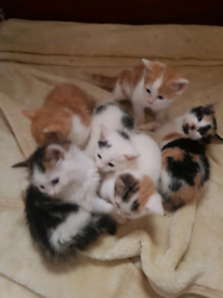 Kittes for sale