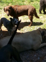 Dog Daycare - Happy Valley Kennels - Coldbrook