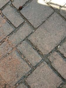 Looking for Old red tile bricks