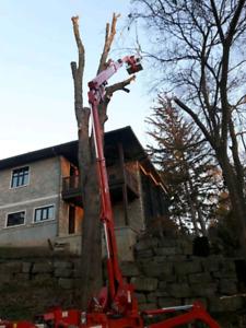 Twenty Valley Tree Service- SPRING DISCOUNT