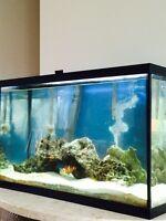 29 gallon salt water fish tank