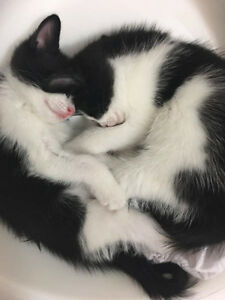 4 adorable kittens need to rehome