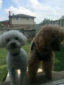 PET SITTING WHILE YOU GO ON VACATIONS Kitchener / Waterloo Kitchener Area image 2