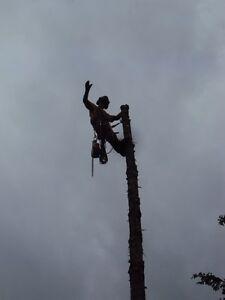 TREE SERVICE  REMOVALS & PRUNING (780) 421-8282 Edmonton Edmonton Area image 4
