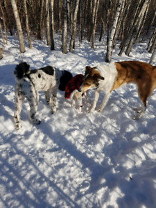 Dog park excursions for Pups