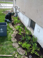 Garden Spring Weed Cleanup Landscaping