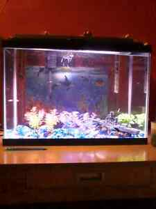 Fish, tank, heater, filter, food, &snails