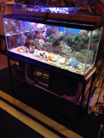 4 FOOT SALT WATER TANK AND STAND    PRICE DROP..........