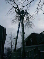 Discount Storm Damage Clean-up & Tree Removal Service