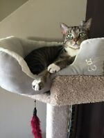 Gorgeous 5 year old female kitty needs loving home - Free