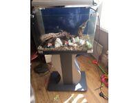 Fish tank aquarium and stand fresh water or tropical fish gravel ornaments bog wood set up