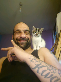 Agoran and tabby mix kitten