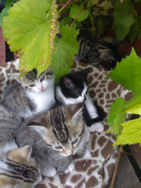 Kittens all booked to good homes