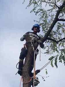 Your neighbourhood Tree Service. Hire the insured KWTreeBarber Kitchener / Waterloo Kitchener Area image 8