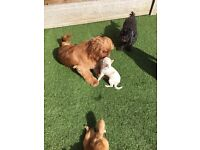 Pink Paws home dog boarding