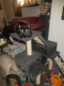 Free 1 year old male kitty cat