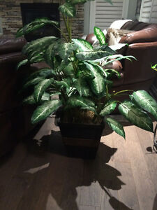 Indoor artificial plant