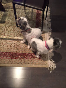 Dog Sitting Services in Laval