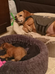 Looking for In Home Pet Sitter