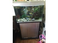 Fish tank with stand and 25 fish £180