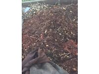 Bark / wood chippings