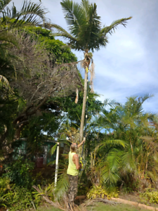 Tree and palms pruning hervey bay Torquay Fraser Coast Preview