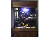 Marine clear seal 2ft marine tank complete... With all live stock etc