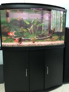 Aquarium avec meuble et accessoires à vendre