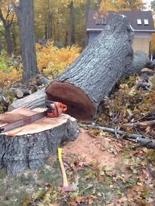 Tree Service/Removal Kingston Kingston Area image 5