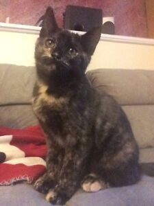 LOST KITTEN HANWELL AREA